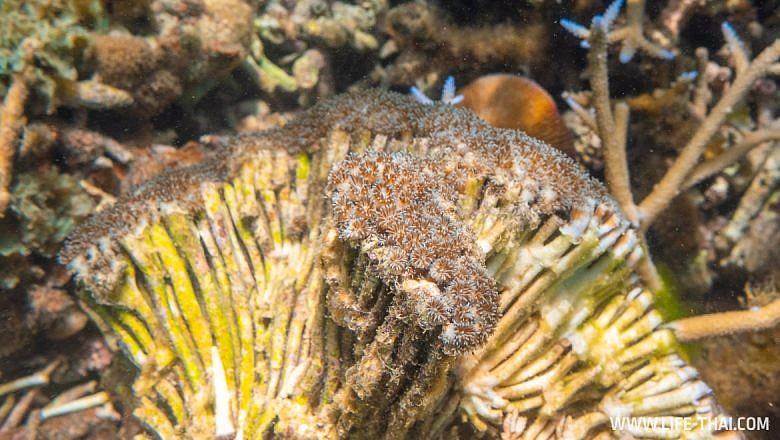 Сноркелинг на Маврикии
