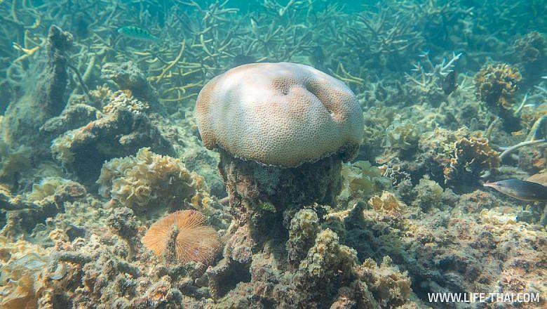 Какие кораллы есть на Маврикии