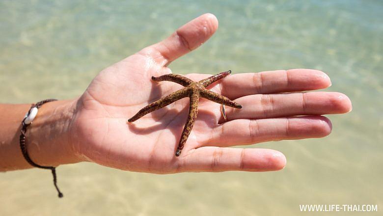 Морские звезды на Маврикии