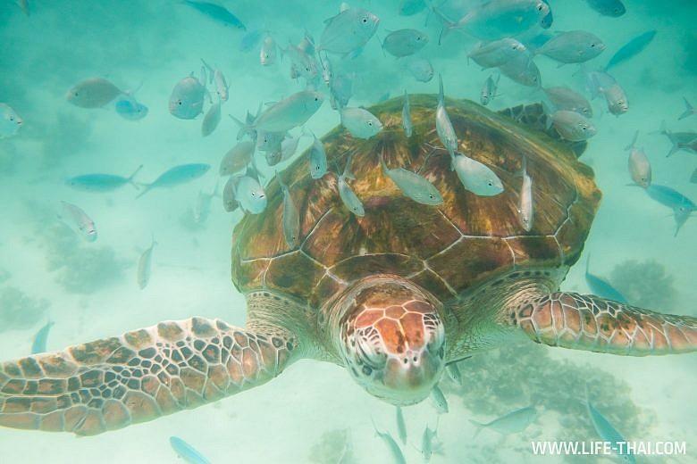 Где поплавать с черепахами на Маврикии