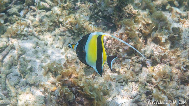Рыбы на Маврикии