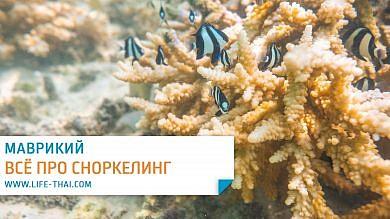 Сноркелинг на Маврикии. Лучшие пляжи, где поплавать с черепахами, морские экскурсии