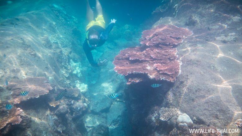 Подводный мир Перхентианских островов