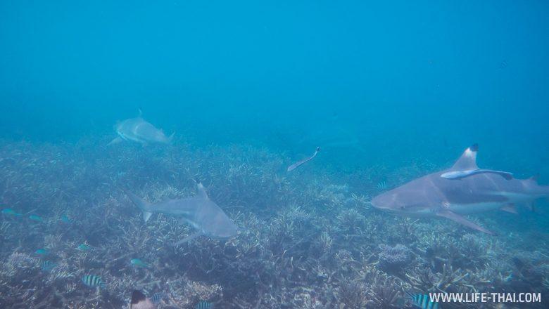 Подводный мир Перхентианских островов, Малайзия