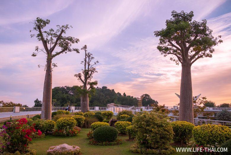 Баобабы в Брунее