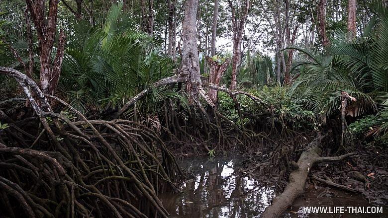 Мангровые рощи в Брунее