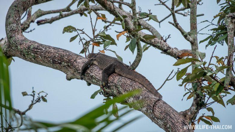 Что мы увидели на экскурсии Mangrove River Safari в Брунее