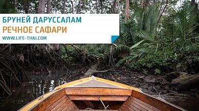 Обезьяны-носачи в Брунее на речном сафари по мангровым рощам