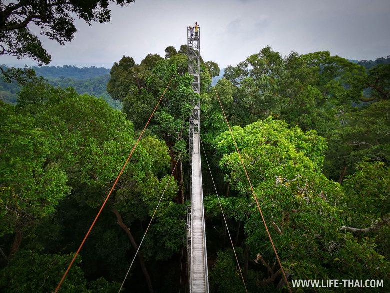 Canopy Walkway в нац. парке Улу Тембуронг, Бруней