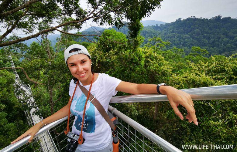 Canopy walkway в парке Улу Тембуронг, Бруней