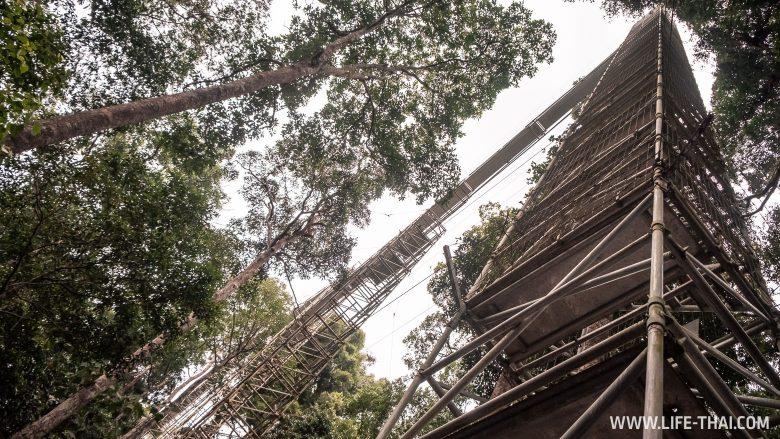 Отзыв об экскурсии в нац. парк Улу Тембуронг
