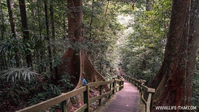 Ступеньки в парке Улу Тембуронг