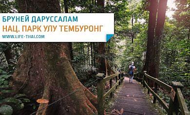 Экскурсия в национальный парк Улу Тембуронг. Цена, где купить, как добраться