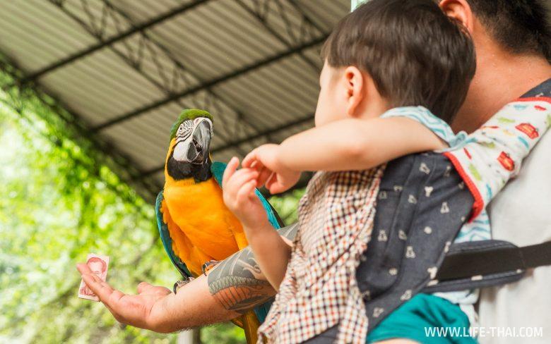 Экскурсии для детей на Пхукете