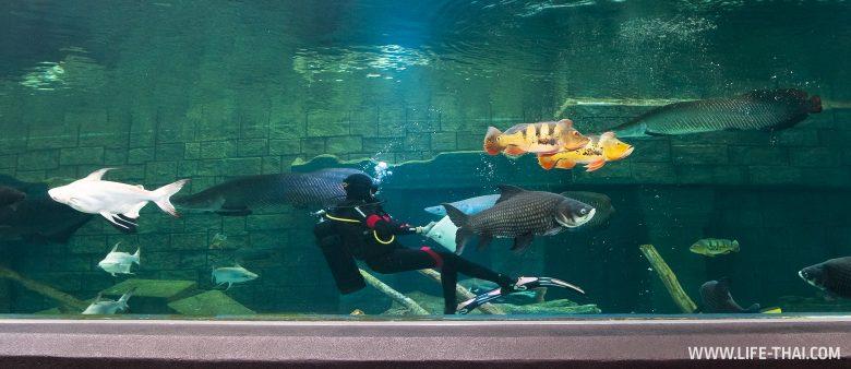 Новый аквариум на Пхукете