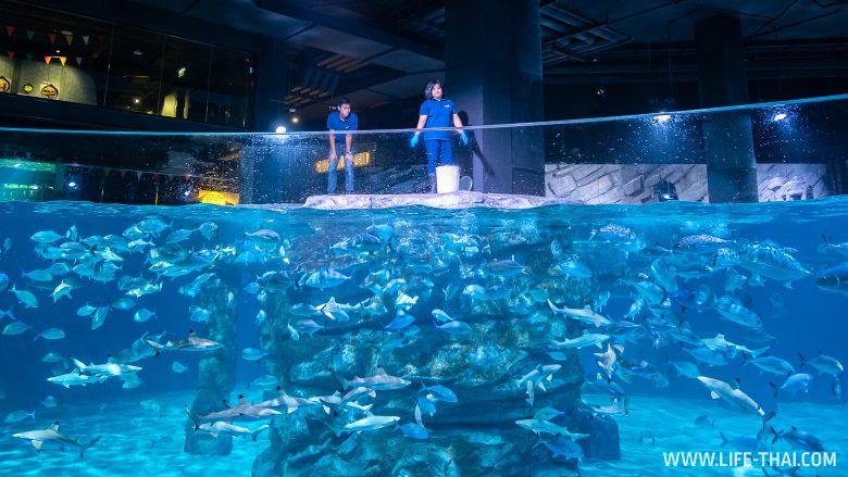 Акулы в аквариуме на Пхукете