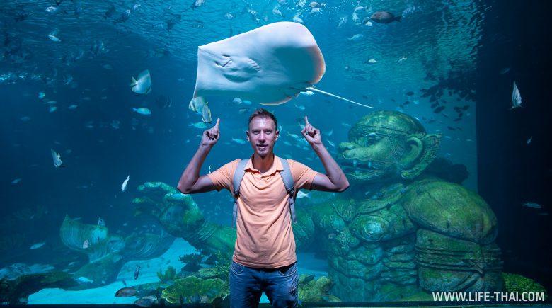 Туннель со скатами в новом аквариуме на Пхукете
