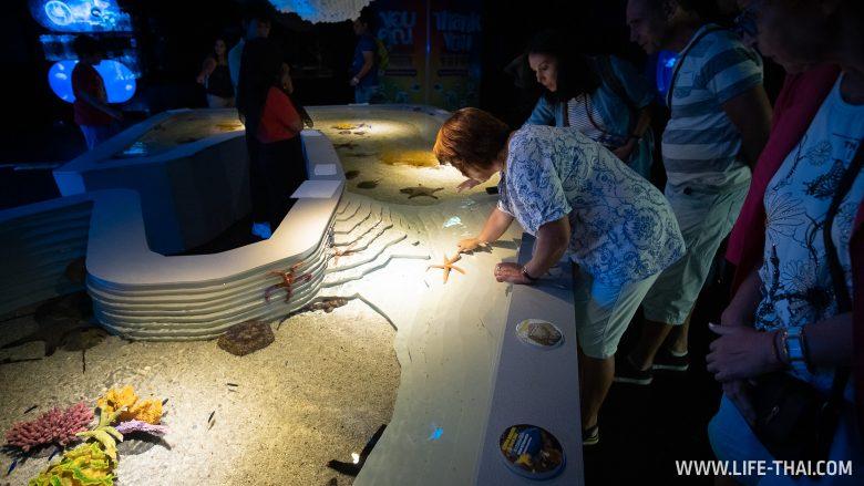 Морские звезды в аквариуме на Пхукете