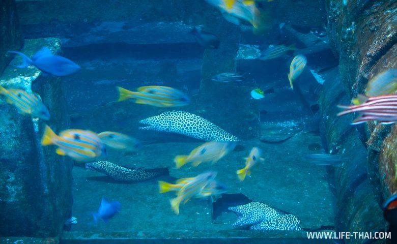 Мурены в аквариуме на Пхукете
