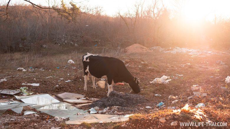Мусор в Черногории - большая проблема