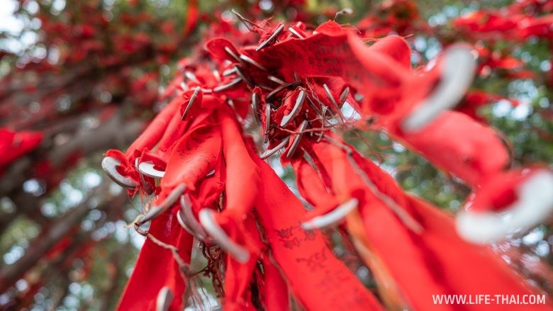 Дерево желаний wishing tree в Секинчане