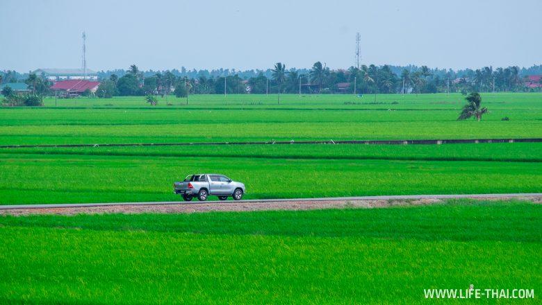 Рисовые поля в Секинчане рядом с Куала Лумпуром