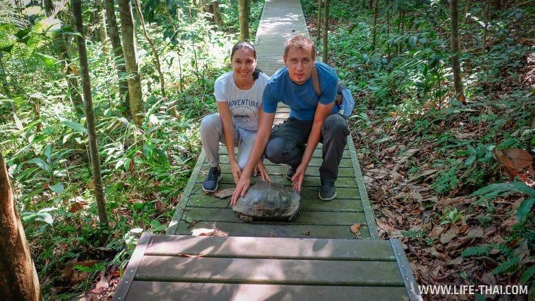 Обитатели парка Таман Негара, Малайзия