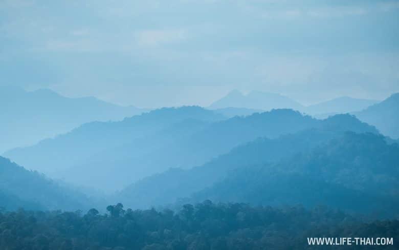 Дождевые леса Малайзии в парке Таман Негара