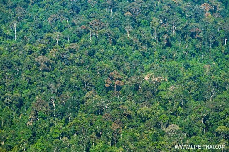Дождевые леса Малайзии в национальном парке Таман Негара
