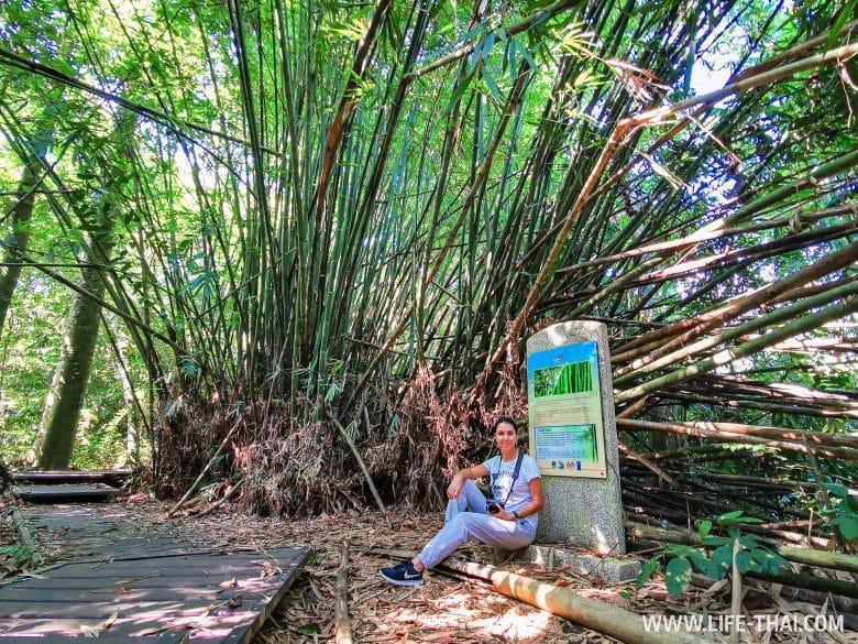Я около бамбукового куста в заповеднике Таман Негара, Малайзия