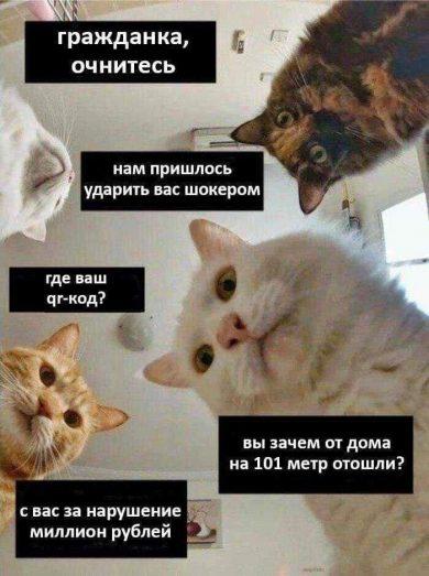 Коронавирус мемы с котами
