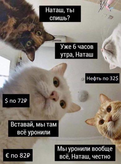 Март 2020 в картинках (мемы с котами)