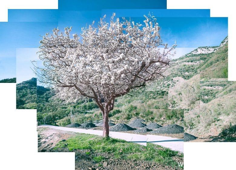 Фотография дерева в стиле Дэвида Хокни