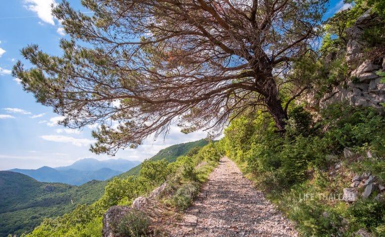 Хребет Врмац в Черногории - описание и фото
