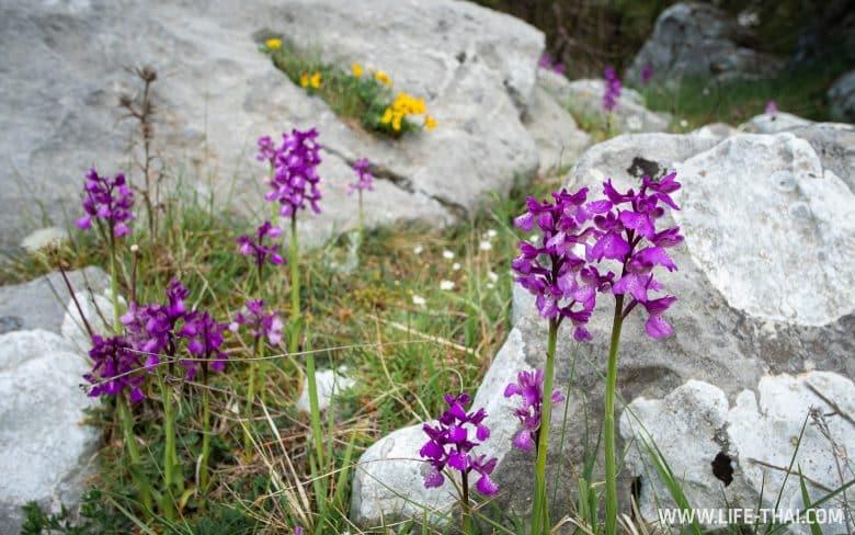 Весной в Черногории всё цветет