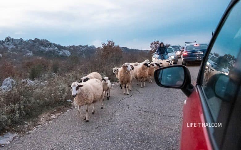 Куда поехать в Черногории на машине - Скадарское озеро